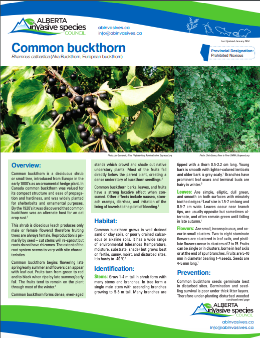 Buckthorn Fact Sheet AISC