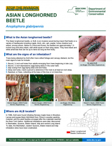 Asian longhorned beetle NY state fact sheet