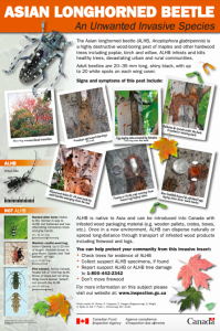 Asian longhorned beetle Unwanted Fact Sheet