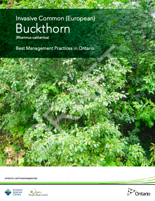 Buckthorn Best Management Practices