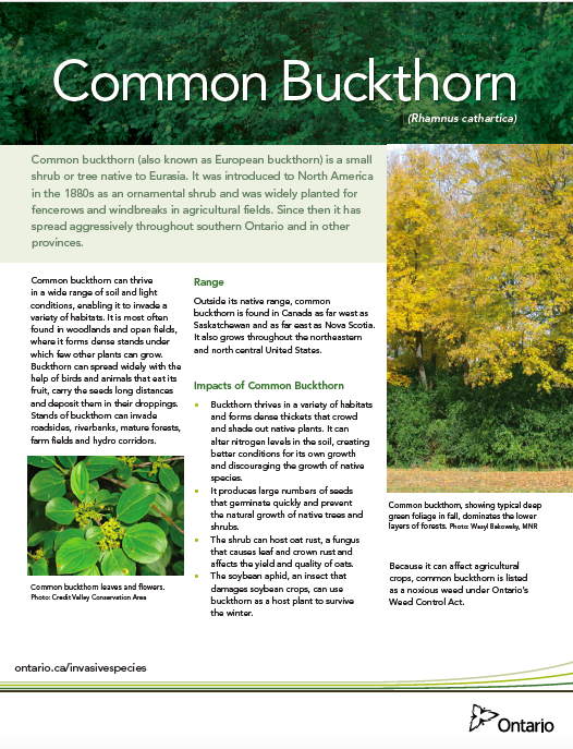 Buckthorn Fact Sheet
