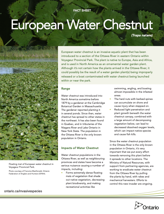 European Water Chestnut Fact Sheet Ontario