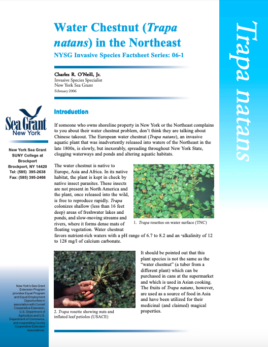 European Water Chestnut Sea Grant New York Fact Sheet