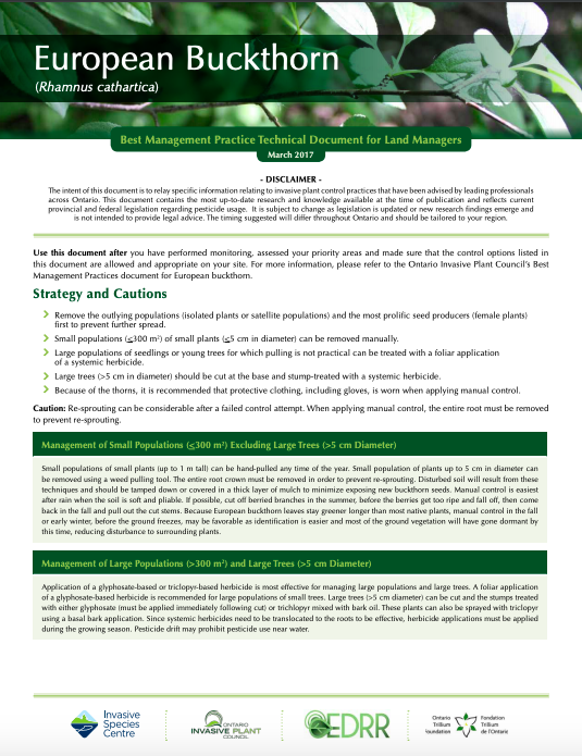 Technical Bulletin European Buckthorn