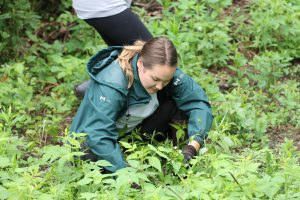 working with invasive species