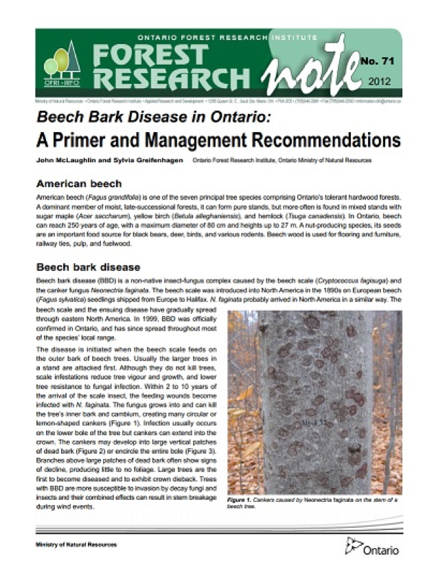 Beech bark disease in Ontario