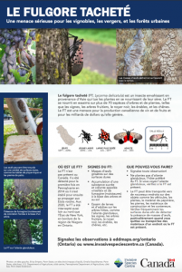 Spotted Lanternfly Fact Sheet FR
