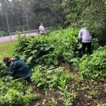 EDRR Volunteers Garlic Mustard Pull