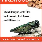 Don't move firewood ad