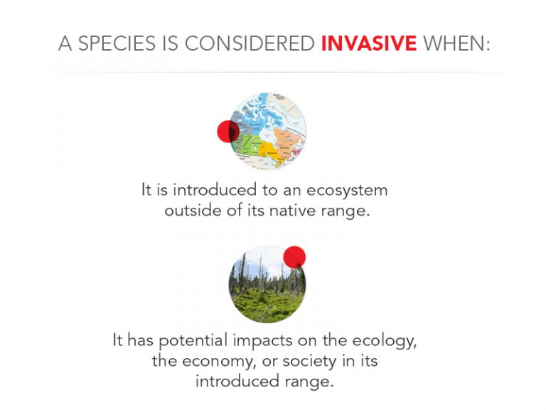 When species is concerned an invasive graphic