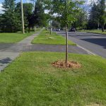 EAB Impacts on urban trees