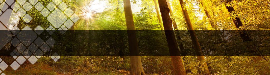 forest invasives banner photo